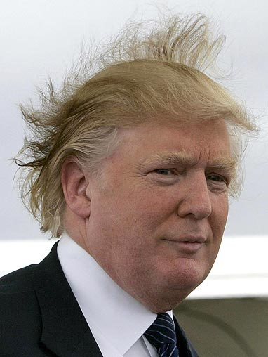 donald trumps wig