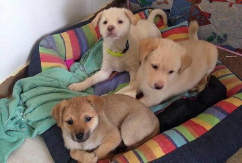 Kath's pups