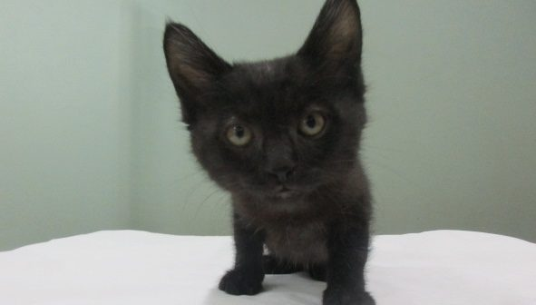 Blackie Kitten 2