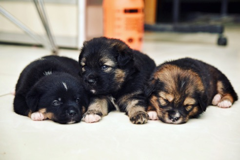 Lucy's puppies
