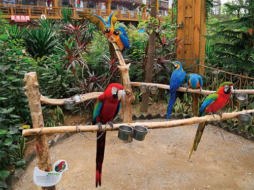 Nangong-Parrots