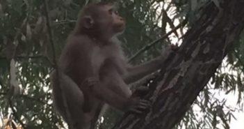 quanfa monkey