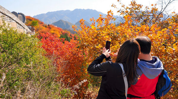 Autumn-Leaves-China-Daily
