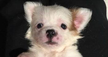 Darla-Pet-of-the-Week-ICVS-rsz