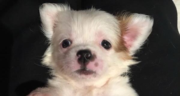 Doggy of the Week: Meet Darla