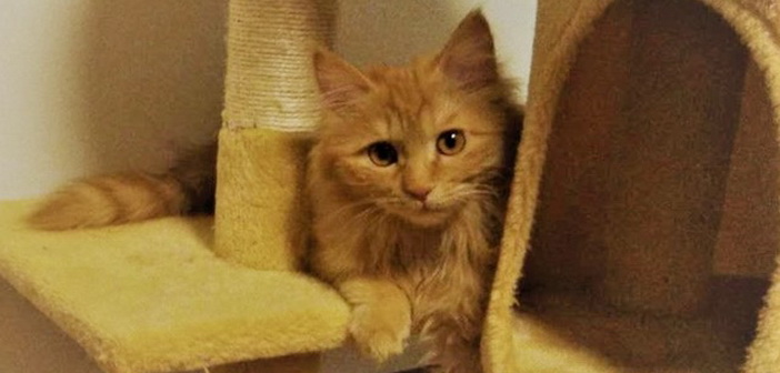 pet of the week beautiful kitten camilla is ready for her forever family beijingkids. Black Bedroom Furniture Sets. Home Design Ideas