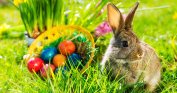 Rabbit and easter eggs